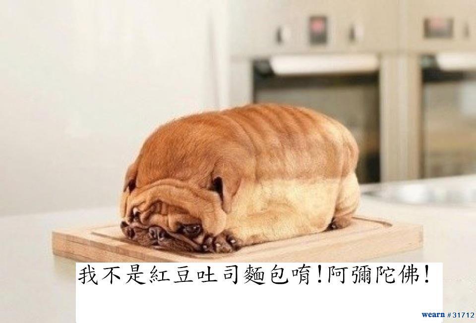 100年 1216 不要吃我, 我不是麵包唷!_03